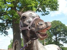 Ένα άλογο Selfie Στοκ φωτογραφία με δικαίωμα ελεύθερης χρήσης