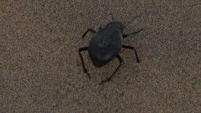 Ένα έντομο που κινείται σε μια έρημο απόθεμα βίντεο