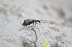 Ένα έντομο Στοκ εικόνες με δικαίωμα ελεύθερης χρήσης