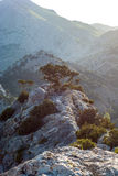 Ένα δέντρο αυξάνεται στα βουνά Στοκ Εικόνα