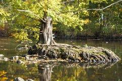 Ένα δέντρο αυξάνεται Στοκ εικόνες με δικαίωμα ελεύθερης χρήσης