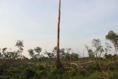 Ένα δέντρο είναι ασφαλές από την αναγραφή Στοκ εικόνα με δικαίωμα ελεύθερης χρήσης