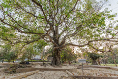 Ένα δέντρο θανάτου, φονικός τομέας Choeng Ek, προάστια Πνομ Πενχ, Καμπότζη στοκ φωτογραφία με δικαίωμα ελεύθερης χρήσης