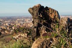 Ένα δέντρο κολοβωμάτων στο λόφο στοκ εικόνες