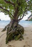 Ένα δέντρο με την ιδιαίτερη μορφή στην παραλία του νησιού Phak Bia, περιοχή AO Luek, Krabi, Ταϊλάνδη Στοκ φωτογραφία με δικαίωμα ελεύθερης χρήσης