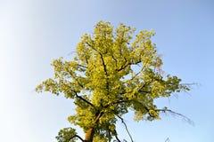 Δέντρο την άνοιξη Στοκ Φωτογραφία