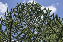 Ένα δέντρο που ανατρέχει, Kew καλλιεργεί Στοκ Εικόνες