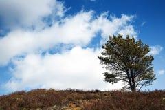 Ένα δέντρο που αποσυνδέεται από το δάσος του Στοκ φωτογραφία με δικαίωμα ελεύθερης χρήσης