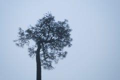 Ένα δέντρο που ξεχωρίζει ένα πρωί του ομιχλώδους χειμώνα Στοκ Φωτογραφία