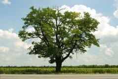 Ένα δέντρο Στοκ εικόνες με δικαίωμα ελεύθερης χρήσης