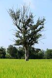 Ένα δέντρο Στοκ φωτογραφία με δικαίωμα ελεύθερης χρήσης