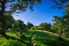 Ένα ίχνος πεζοπορίας περνά μέσω ενός θερινού τοπίου των πολύβλαστων πράσινων, χλοωδών λιβαδιών και του δρύινου δάσους κάτω από έν στοκ εικόνα