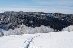 Ένα ίχνος στη χιονώδη κλίση στην κορυφή του βουνού με τα πεύκα στο υπόβαθρο στοκ φωτογραφία με δικαίωμα ελεύθερης χρήσης
