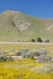 Ένα αγροτικό σπίτι που περιβάλλεται από τα κίτρινα λουλούδια άνοιξη, τα χρυσά και διάφορα λουλούδια ερήμων στο Carrizo εθνικό μνη Στοκ Φωτογραφία