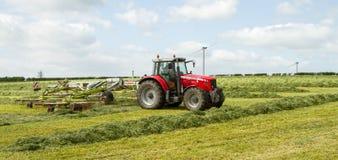 Ένα αγροτικό τρακτέρ που μαζεύει με τη τσουγκράνα το χορτάρι σανού στον τομέα Στοκ Εικόνες