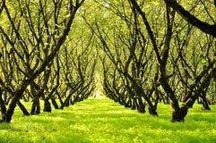 Ένα αγρόκτημα καρυδιών Στοκ φωτογραφίες με δικαίωμα ελεύθερης χρήσης