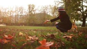 Ένα λαγωνικό πηδά δεδομένου ότι ο κύριός του τον πειράζει με ένα φύλλο φθινοπώρου απόθεμα βίντεο