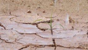 Ένα αγωνιμένος δέντρο πρέπει να αυξηθεί από τα ξηρά χώματα αλλά έχει ποτίσει τα δέντρα όπως τελευταίο αισιόδοξο το φωτεινό απόθεμα βίντεο