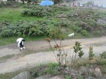 Ένα αγόρι που παίζει με το σκυλί της στη φύση Στοκ εικόνες με δικαίωμα ελεύθερης χρήσης