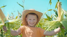 Ένα αγόρι σε ένα καπέλο αχύρου παίζει cornfield, το παιδί κρατά τους σπάδικες καλαμποκιού και παρουσιάζεται ως κάουμποϋ απόθεμα βίντεο