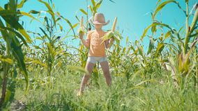 Ένα αγόρι σε ένα καπέλο αχύρου παίζει cornfield, το παιδί κρατά τους σπάδικες καλαμποκιού και παρουσιάζεται ως κάουμποϋ φιλμ μικρού μήκους