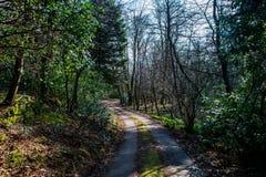 Ένα αμμοχάλικο ένας δρόμος τρόπων, μέσω ενός δάσους Στοκ Φωτογραφίες