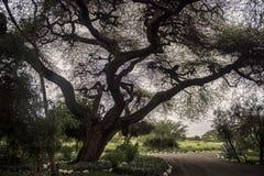 Ένα λαμπρό σκοτεινό δέντρο στο στρατόπεδο Στοκ εικόνες με δικαίωμα ελεύθερης χρήσης