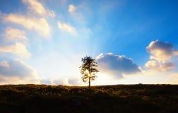Ένα αναδρομικά φωτισμένο δέντρο Στοκ Φωτογραφία