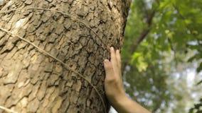 Ένα ανθρώπινο χέρι αγγίζει την κινηματογράφηση σε πρώτο πλάνο ενός δέντρου, ο φλοιός ενός δέντρου είναι κινηματογράφηση σε πρώτο  απόθεμα βίντεο