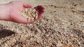 Ένα ανθρώπινο χέρι παίρνει τα θαλασσινά κοχύλια, άμμος στην παραλία απόθεμα βίντεο
