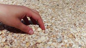 Ένα ανθρώπινο χέρι παίρνει τα θαλασσινά κοχύλια στην παραλία απόθεμα βίντεο