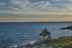 Ένα απομονωμένο δέντρο δύσκολο Coasting του Μαίην στοκ φωτογραφίες με δικαίωμα ελεύθερης χρήσης