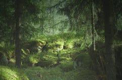 Ένα απόκρυφο δάσος σε Dalarna στοκ φωτογραφίες