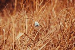 Ένα απόμερο σαλιγκάρι που κρεμά σε μια λεπίδα της χλόης Στοκ εικόνα με δικαίωμα ελεύθερης χρήσης