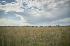 Ένα απλό αγροτικό τοπίο Στοκ Εικόνα