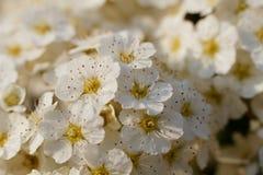 Ένα αρκετά άσπρο λουλούδι στην κινηματογράφηση σε πρώτο πλάνο Στοκ φωτογραφίες με δικαίωμα ελεύθερης χρήσης
