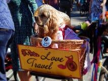 Ένα αστείο σκυλί στις κυρίες παρελάσεων ` στα ποδήλατα Στοκ Εικόνες