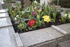 Αστικό κρεβάτι λουλουδιών στο στο κέντρο της πόλης Βανκούβερ Στοκ Φωτογραφία