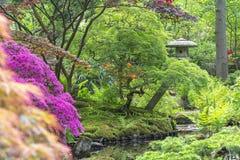 Ένα βλέμμα πέρα από ένα ρεύμα με τις αζαλέες, τις φτέρες και τα acers σε μια εικόνα μιας παγόδας στον ιαπωνικό κήπο στο πάρκο Cli στοκ εικόνες με δικαίωμα ελεύθερης χρήσης