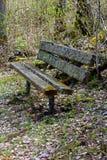 Ένα βρύο κάλυψε τον πάγκο στο δάσος Στοκ Φωτογραφία