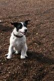 Ένα γέλιο σκυλιών Στοκ φωτογραφία με δικαίωμα ελεύθερης χρήσης
