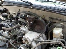 Ένα γατάκι κάτω από την κουκούλα Στοκ Φωτογραφία