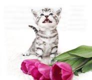 Ένα γατάκι με μια ανθοδέσμη των λουλουδιών Στοκ εικόνες με δικαίωμα ελεύθερης χρήσης