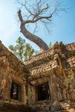 Ένα γιγαντιαίο δέντρο στο atient παλαιό ναό TA Phrom, Angkor Wat, Καμπότζη Στοκ εικόνες με δικαίωμα ελεύθερης χρήσης