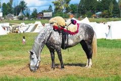 Ένα γκρίζο άλογο βόσκει σε ένα λιβάδι Στοκ Εικόνες