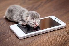 Ένα γκρίζο νεογέννητο γατάκι κοντά στο κινητό τηλέφωνο Το μωρό καλεί στο mot Στοκ φωτογραφία με δικαίωμα ελεύθερης χρήσης