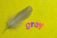 Ένα γκρίζο φτερό με το γκρι λέξης Στοκ φωτογραφία με δικαίωμα ελεύθερης χρήσης
