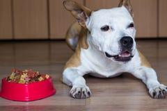 Ένα γλυκό σκυλί τρώει μια απόλαυση στοκ φωτογραφίες με δικαίωμα ελεύθερης χρήσης