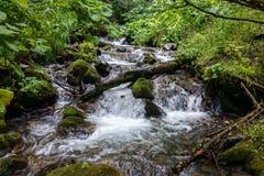 Ένα γρήγορο ρεύμα βουνών με τους βράχους, που περιβάλλονται από την πρασινάδα στοκ φωτογραφία