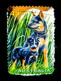 Ένα γραμματόσημο που τυπώνεται στην Αυστραλία παρουσιάζει μια εικόνα K9 των σκυλιών ασφάλειας στην αξία στο σεντ 45 Στοκ Εικόνες